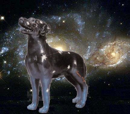 Под созвездием большого пса попаданец в маленького сириуса блэка